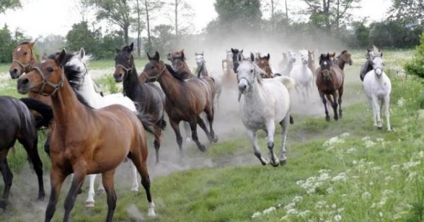Hodowla koni i jeździectwo – nowy kierunek studiów w Lublinie