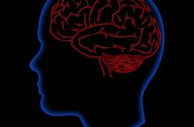 Nauka angielskiego powiększa mózg