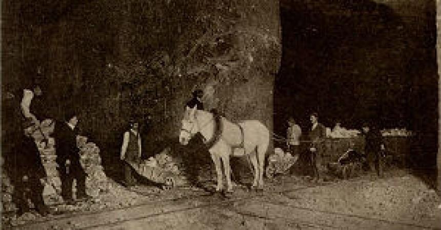 O koniach na wystawie i w wielickiej kopalni