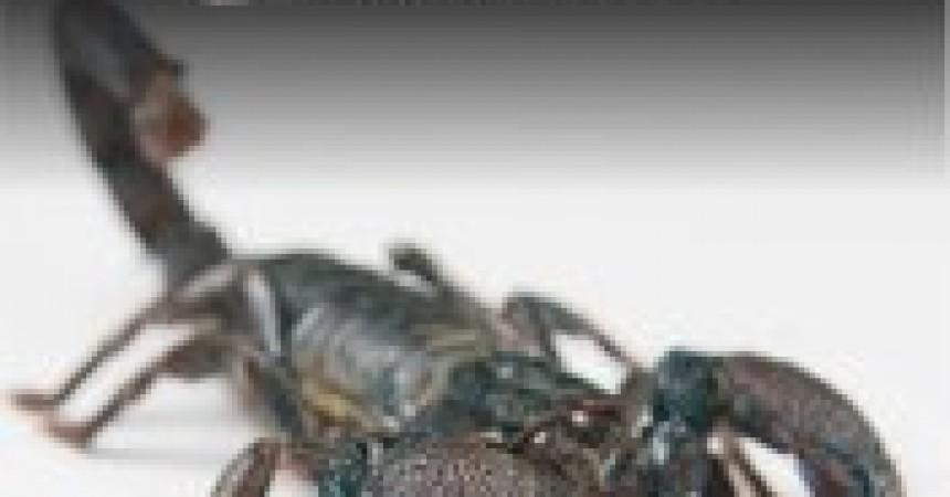 Czarny Skorpion zbiór opowiadań Michała Majewskiego