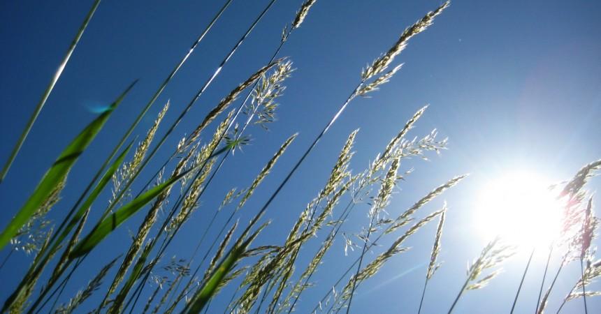 Komfortowa oaza w upalne dni bez klimatyzacji