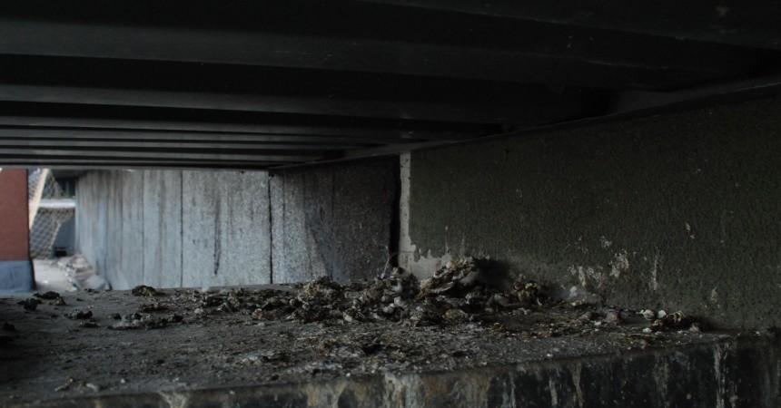 Co najczęściej brudzą gołębie i jak je przepędzić?