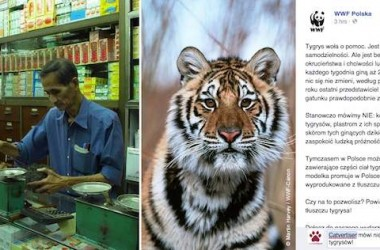 WWF wybrał Catvertisera