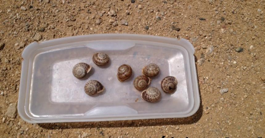 Polish Snail Holding poszukuje w Afryce nowych linii genetycznych ślimaków