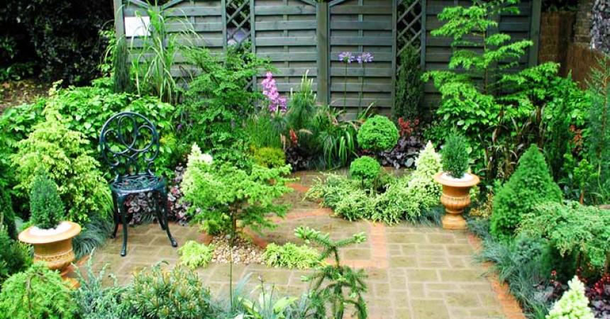 Krzewy ozdobne do ogrodu i na balkon