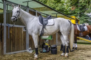 Cavallo bianco in scuderia