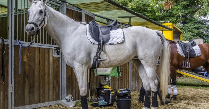 Masz ośrodek jeździecki? Warto zainwestować w halę aluminiową!