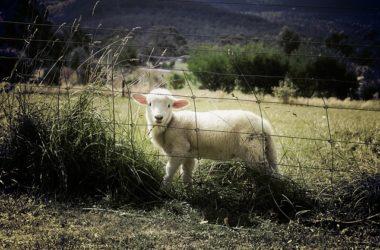 Dobra agroturystyka – trzymanie i łamanie standardów w jednym