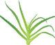 Czym się kierować wybierając nasiona traw?
