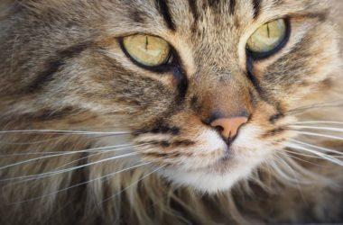 Skąd czerpać wiedze o kotach
