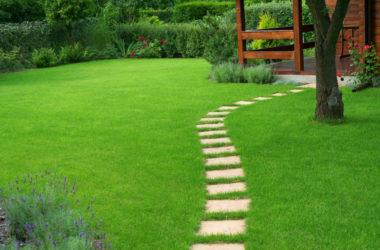 Analiza stanu trawnika – jak ocenić, czy warto zregenerować trawnik