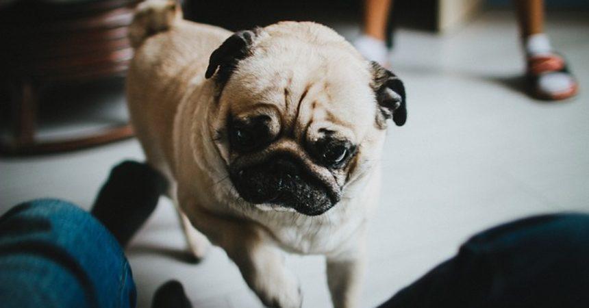 Pies jest najlepszym przyjacielem człowieka
