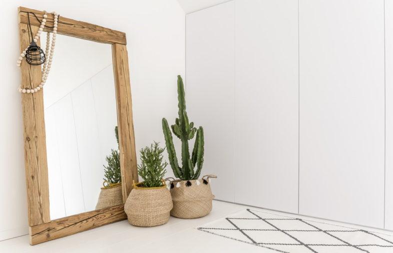 Rośliny domowe dla zapominalskich