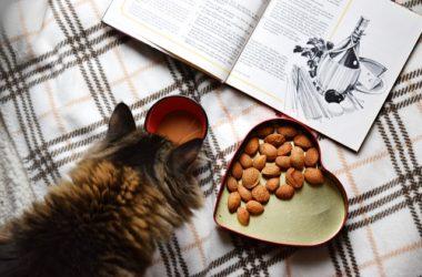 Jakiej karmy potrzebuje Twój kot?
