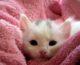 Mleko dla małego kota? Czy to dobry pomysł?