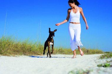 Wakacje z naszym zwierzakiem! Domy i apartamenty wakacyjne w których nasz pies jest mile widziany!