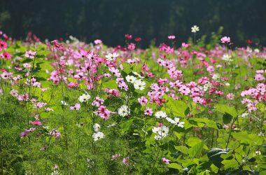 Magiczny ogród – wskazówki i cenne porady