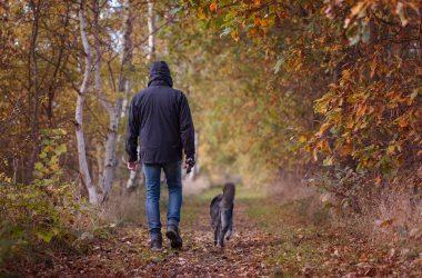 Jak często należy spacerować z psem ?