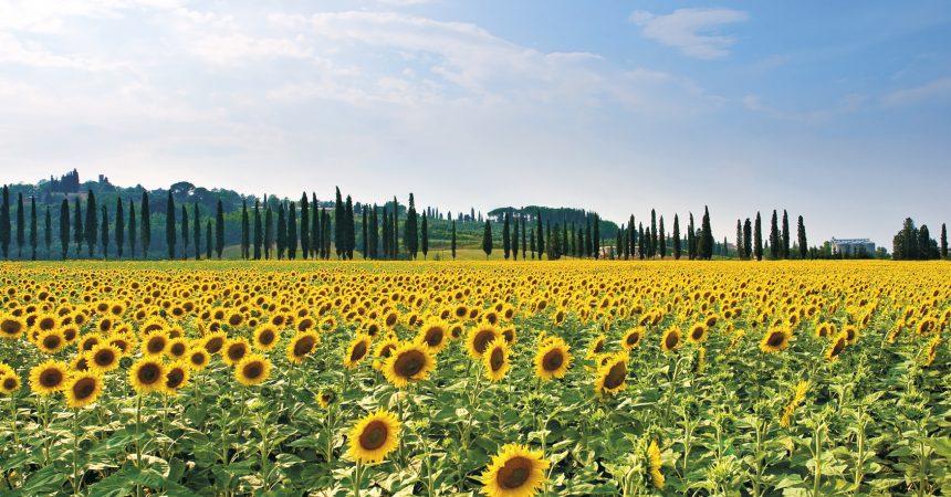 Jesienne uroki Toskanii – idealne miejsce na wakacje!