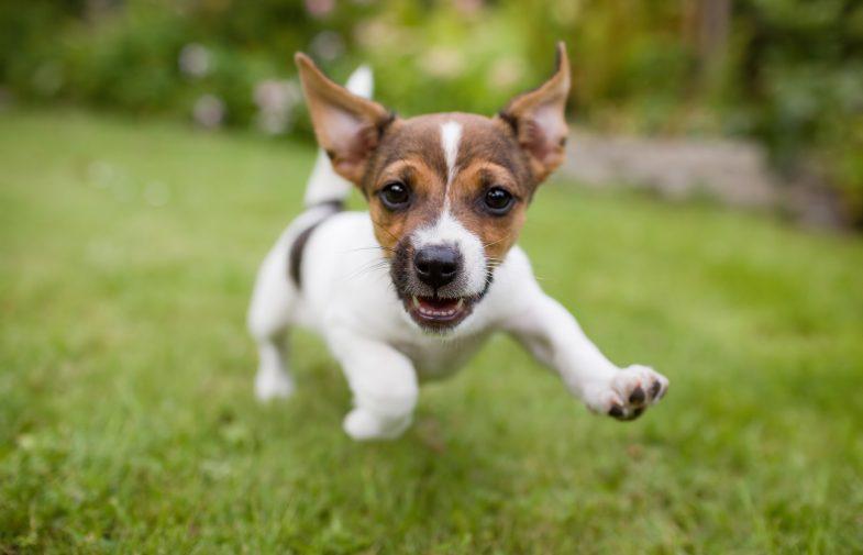 Jak przygotować się do opieki nad psem?