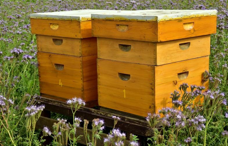 Jaki ul wybrać – Pierwsze kroki w pszczelarstwie