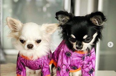 Psia moda – modne ubranka dla psów