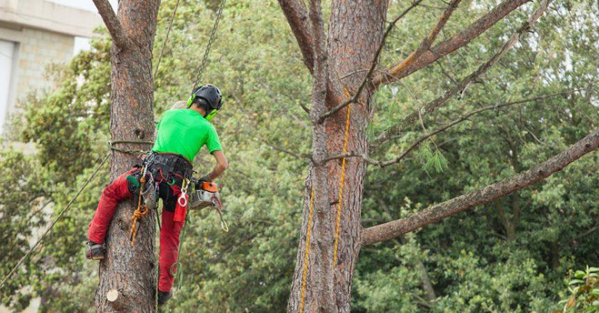 Wycinka drzewa na działce – o czym trzeba pamiętać?