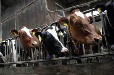 Paszowozy i wycinaki do kiszonki – Podstawowe wyposażenie nowoczesnego gospodarstwa