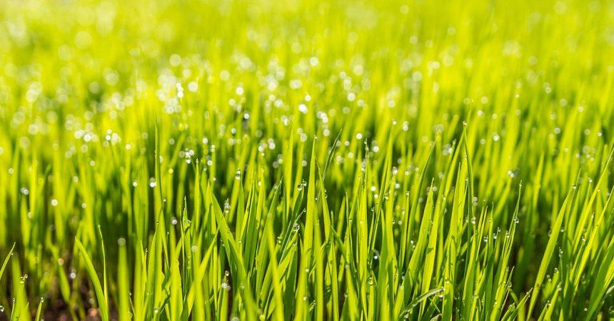 Nawóz do trawy – zadbaj o piękną murawę